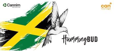 HummingBud – the Jamaican medical cannabis flower (PRNewsfoto/Cantourage)