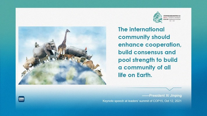 President Xi Jinping delivers a keynote speech via video link at the leaders' summit of the 15th meeting of the Conference of the Parties to the Convention on Biological Diversity (COP15) held in Kunming, Southwest China's Yunnan province, Oct 12, 2021. [Graphic by chinadaily.com.cn]